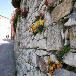 Montaretto - muro fiorito