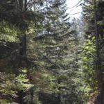 il bosco del Giandriale
