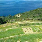 gli orti sul mare del podere Case Lovara