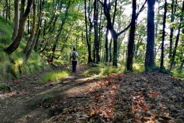Nel bosco da San Nicolao al Passo del Bracco