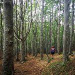 Cappuccetto rosso nella foresta