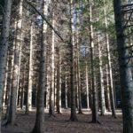 I faggi delle Casermette del Monte Penna