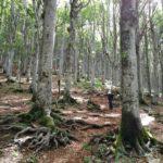 La foresta del Monte Penna
