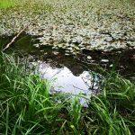 Il riflesso del Pennino nel laghetto