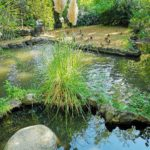 Parco Arenzano - laghetto