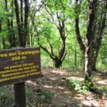 Area del Castagno presso il Lago della Tina