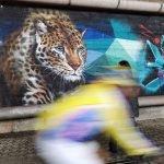 Leopardo nei graffiti di Arenzano