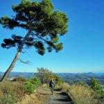 strada panoramica da Cipressa a Lingueglietta