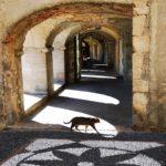 Noli - un gatto attraversa indisturbato l'antica loggialoggia
