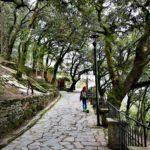 Lecceta di Montallegro - Rapallo