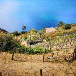 Campiglia - Monesteroli - casa con vigna