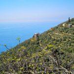 Polanesi - torre vista dal sentiero per Sant'Apollinare