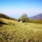 Monte Castelletto - prato