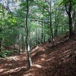 Nell'ariosa foresta di Liciorno