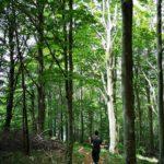 Discesa nel chiaro-scuro del bosco
