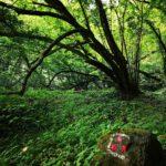 Sentiero nel bosco per San Martino di Licciorno
