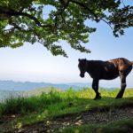 Un cavallo selvaggio (in posa) sulla cresta