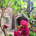 Rose fiorite a Cassagna