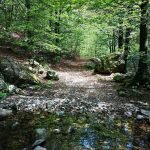 Il sentiero nel bosco che porta al quadrivio di Crocetta