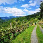 Strada in Vallepiana di ritorno da San Martino di Licciorno