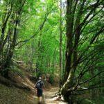 Camminando nella faggeta del Monte Caucaso