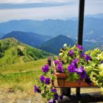 fiori al rifugio panoramico del Monte Caucaso