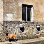 Casa isolata al Bric dei Ladri con gatto e capretta
