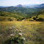 Cardo con vista sul Monte Tobbio dal Pracaban
