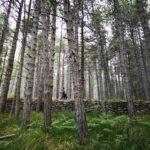 Nella Pineta di Suvero tra pini e muretti a secco