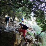 Salita tra gli alberi verso la vetta della Palmaria