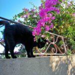 Gatto nero su muretto fiorito
