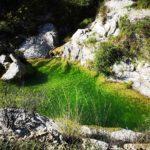 Il verde laghetto sotto il ponte Cin