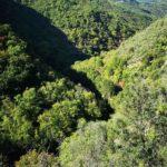 Valle del torrente Sgorea
