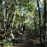 Sentiero nel bosco verso la vetta della Rocca di Perti