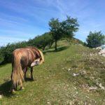Cavallo sulla cima del Monte Acuto