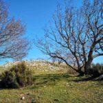 Vegetazione sul Monte Acuto