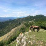 Cavallo sul Monte Acuto