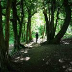 Passaggio nel bosco sul sentiero verso Alpesisa