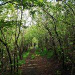 Nel bosco scendendo da Forte Geremia