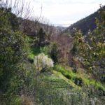 Scorcio mare dalla valle del Rio Gambaro