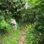 Sentiero fiorito lungo il Rio Gambaro