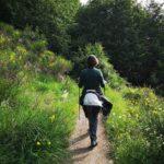 Il sentiero dal Colle di Creto verso Alpesisa