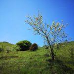 Vegetazione sul Monte Sejeu