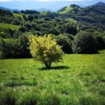 Panorama dal sentiero per il Monte Antola