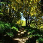 Sotto i maggiociondoli verso il Monte Antola
