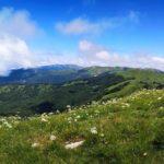 Prato fiorito sul Monte Carmo di Carrega