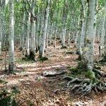 Nella foresta del Monte Penna