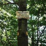 Cartello di divieto raccolta funghi