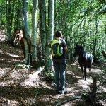 Cavalli a spasso sul sentiero