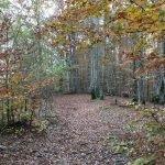 La faggeta del Monte Gifarco in autunno
